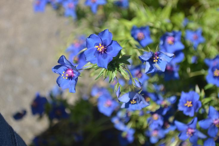 depth of filed of flower