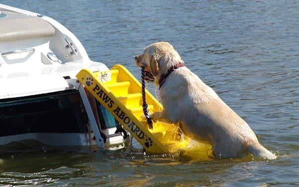 Échelle pliante / pour bateau / pour animal domestique / de poupe Paws Aboard