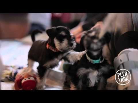 Trinity Western University Puppy Room - No More Stress! - YouTube