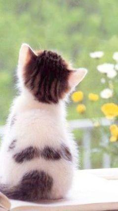 Kätzchen zur Annahme Houston Tx über Kätzchen und Babys #annahme #babys #houston #katzchen | kotki | Cats, Cute cat gif, Kittens cutest