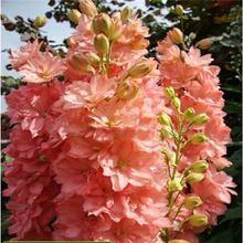 Цветок семена Дельфиниум Семена Семена красивый Цветок Растений главная сад цветочных растений АА(China (Mainland))