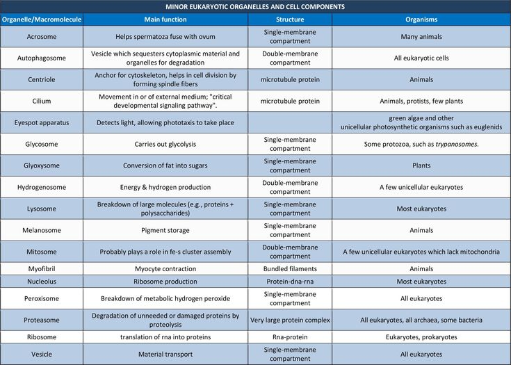 different types of resume and its functions