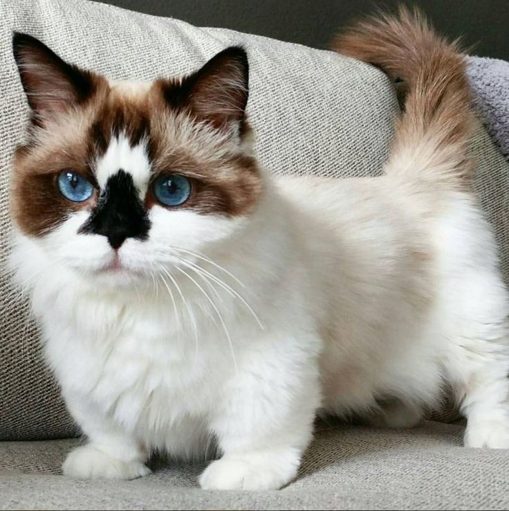 Look at this kitty's colors! Beautiful!