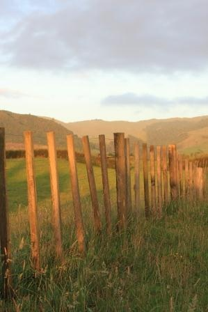 Fence at sunset, Te Aroha