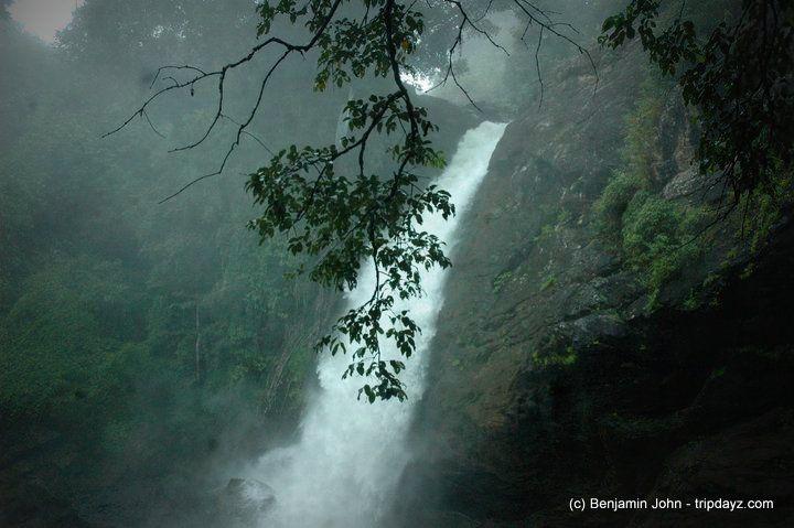 Wayanad – The Adventure Green Spot in Kerala #Car #travel #Wildlife