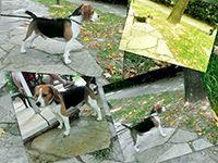 Elit Yavru | Köpek eğitimi hakkında bilgiler, pet eğitim, evcil köpek eğitimi, profesyonel köpek eğitimi, köpek çiftliği http://www.elityavru.com/kopek-egitimi