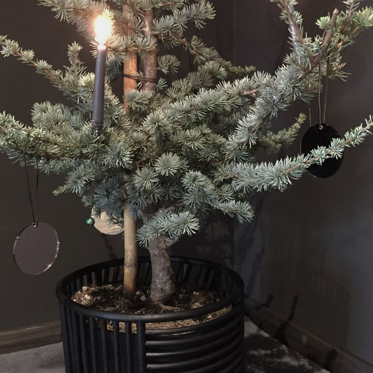 AYTM Christmas tree with Pila ornaments and in a Motus basket