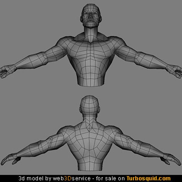 male torso bodybuilder anatomy - Cerca con Google