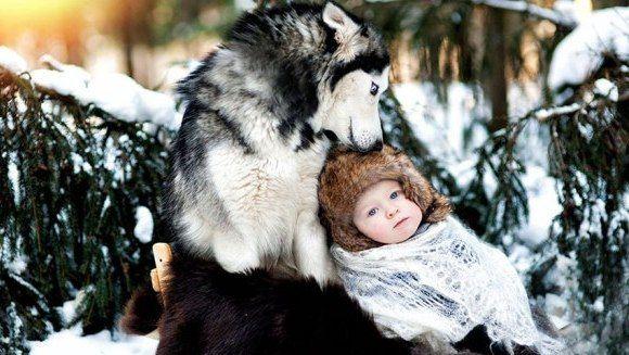 În grija băieţilor mari! Bebeluşii supravegheaţi de câini uriaşi (Galerie Foto)