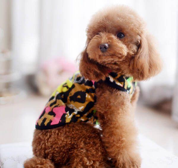 Pet colete Pet camisolas de casacos de leopardo cão quatro camiseta S ml XL alishoppbrasil