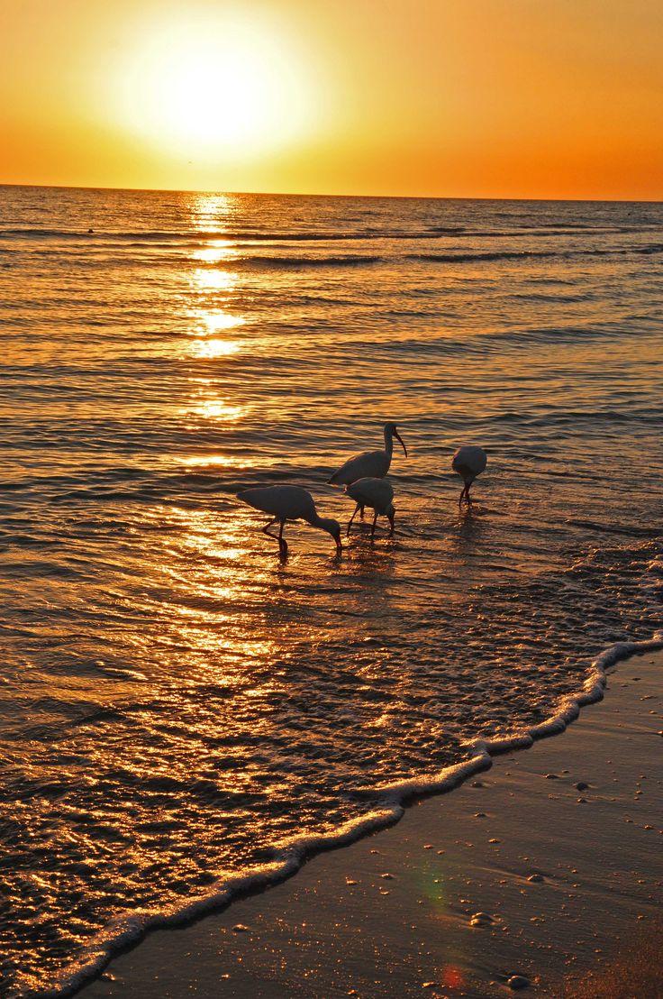 Sunset at Sanibel, Florida