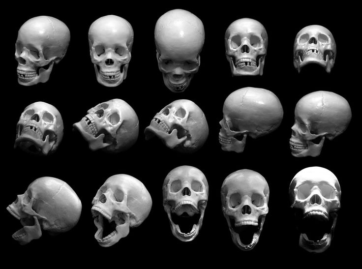 multiple angles of a human skull. | head. skeleton. open mouth. perspective. view. turned. angled. front. side. sideways. tilted. anatomy. bones. bone. face. dead. death