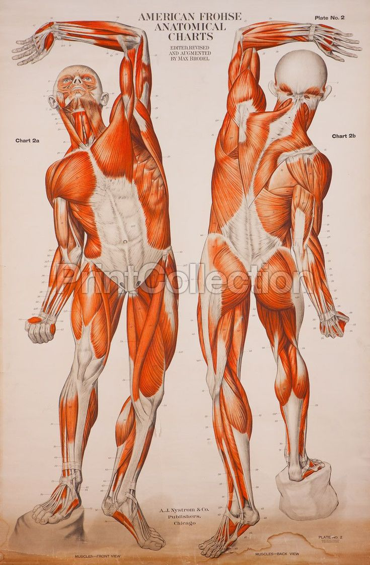 9 best The Human Body Study Resources images on Pinterest   Human ...