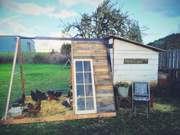 A-frame Coop - recycled pallets, window, and old metal swingset into a backyard chicken coop.