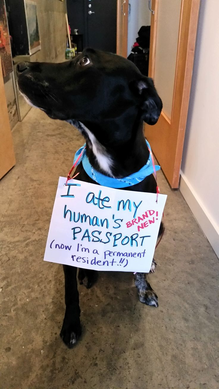 You Should see the Exit Visa, YUCK! Dog shaming, Animal