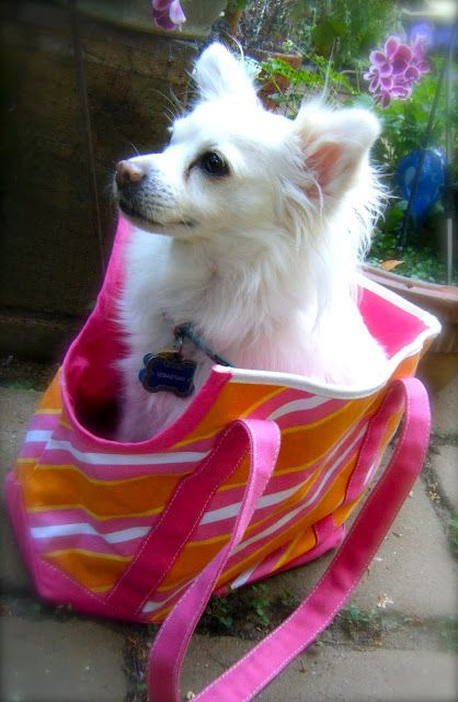 Sew DoggyStyle: Easiest Upcycled Tote Transformation Ever!!!