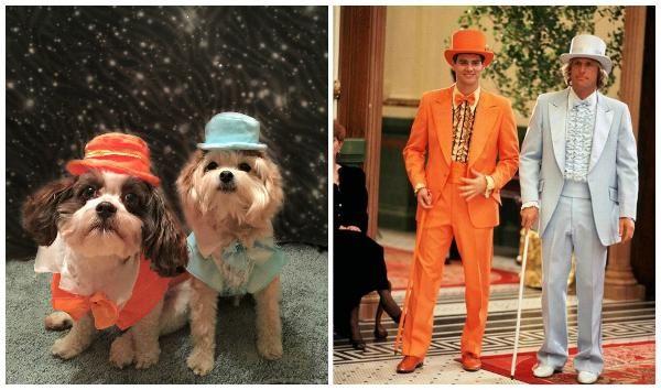 Dumb and Dumber Harry Tux Dog Costume - Blue