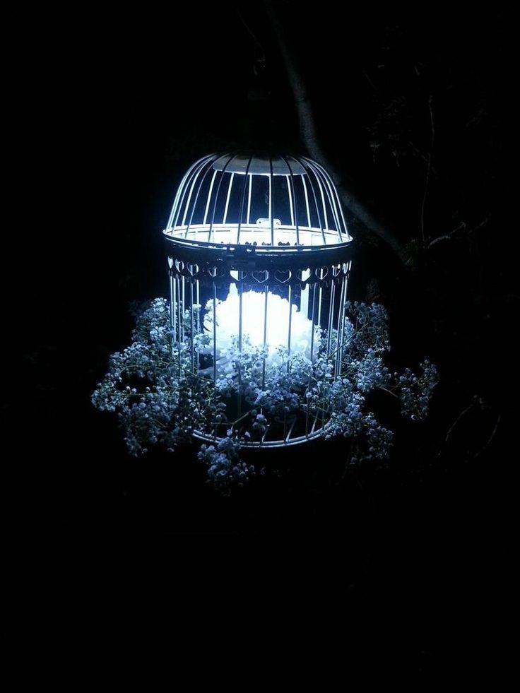 Lights in birdcages