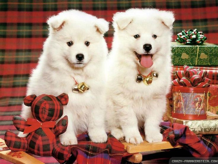 15 best Christmas Dogs Wallpapers images on Pinterest | Animals ...