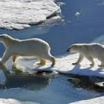 #fasting #primal Land-based food not nutritionally sufficient for wild polar bears, according to new study  12, 2016) is shedding new light on how scientists evaluate polar bear diet and weight loss during their fasting season. https://www.sciencedaily.com/releases/2016/09/160913150503.htm