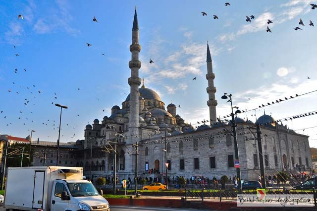 Birds of a feather... Downtown Istanbul
