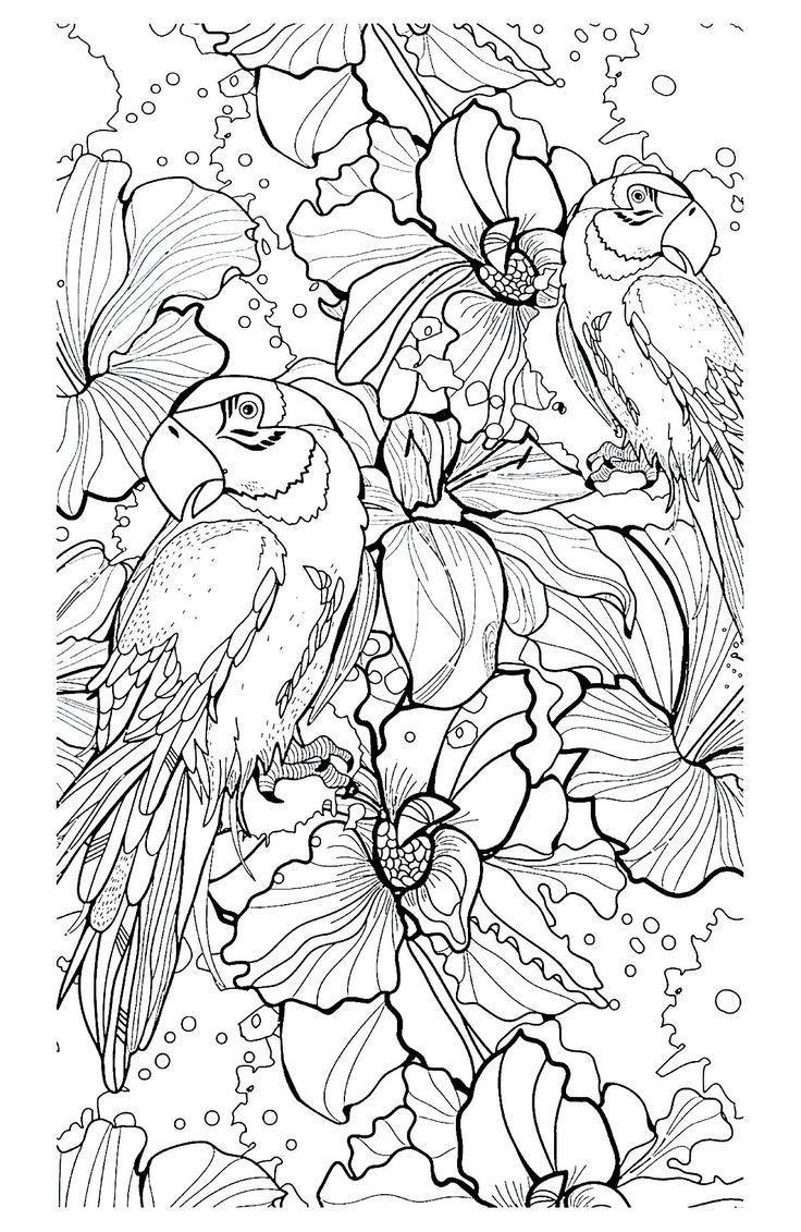 Galerie de coloriages gratuits coloriage-adulte-difficile-perroquets…