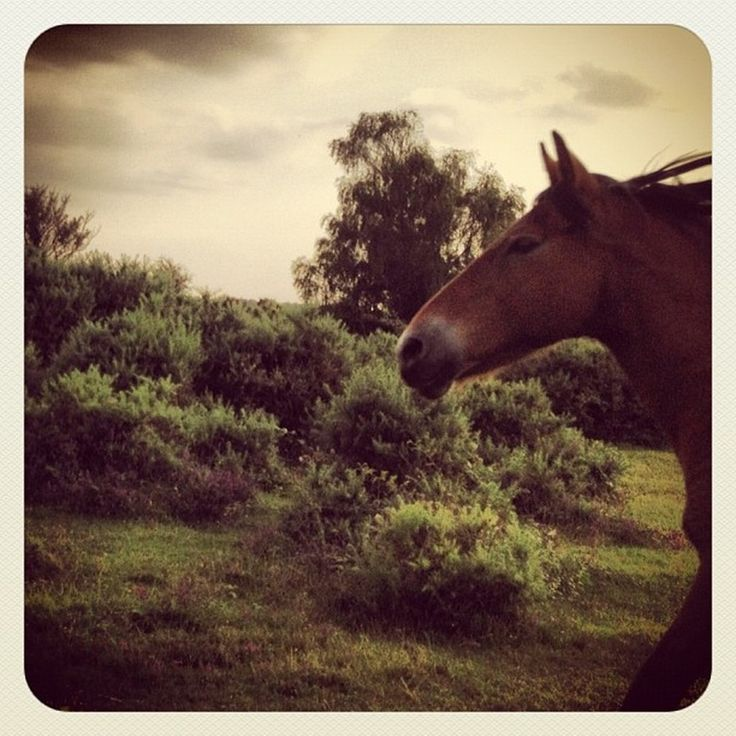 "Photo ""#sky#clouds#cloudy#cloudysky#horse#pony#wild#newforestpony#racing#r"" by noo_noo76"