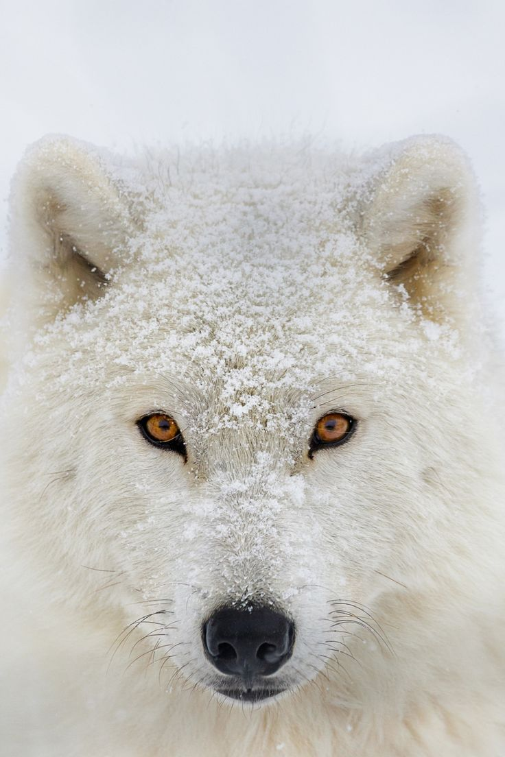 Another world and universe citizen... — beautiful-wildlife:   Frozen lookbyDominic...