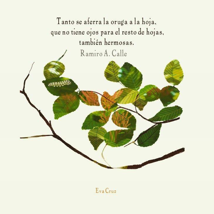 """Eva Cruz. Libro """"el arte de la armonía"""", Ramiro A. Calle."""