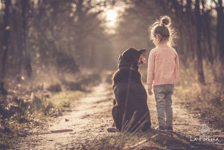Hondenfotografie - fotoshoot met hond - www.la-foresta.be