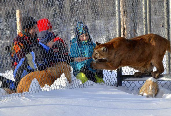 En bordure du fjord du Saguenay, les amateurs de plein air vont adorer - découverte du traîneau à chiens, motoneige, randonnées en raquettes - La variété d'hébergement : yourtes, chalets, motels ou gîtes ainsi que le milieu naturel et ses animaux sont un des attraits majeurs