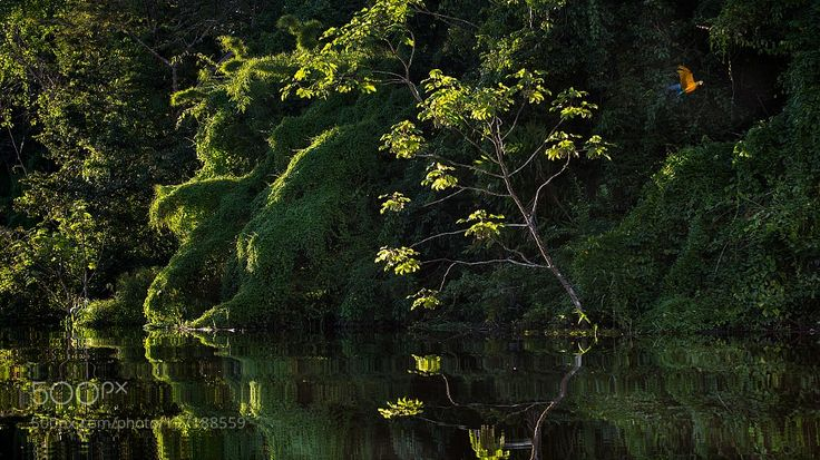 Popular on 500px : Amazon Jungle by jackykobelt