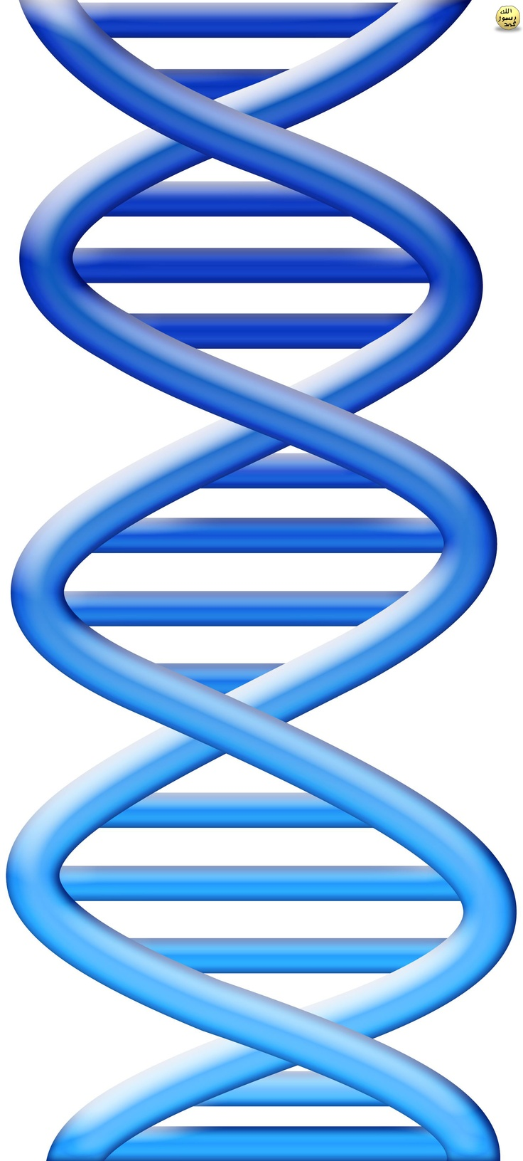 Allah'ın DNA'da sakladığı bilgiler sayesinde kemiklerin arasında sürtünmeyi engelleyen kıkırdaklar, şekil, yapı ve konumları açısından çok özel dokulardır. Örneğin dizlerdeki kıkırdaklar tampon görevi görerek, onlarca kilo ağırlığındaki vücut ağırlığının hissetmeden taşınmasını sağlarlar. Bunların ayrıntılı planı da DNA'da kayıtlı bilgilerdir.