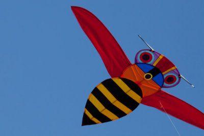 Die Wespe sieht so harmlos aus und ist doch so gefährlich.