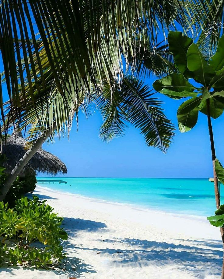 Maldives https://www.hotelscombined.com/Place/Corse.htm?a_aid=150886