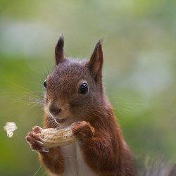 Grappige eekhoorn