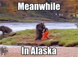Ahahahahaha someone's in the bear costume