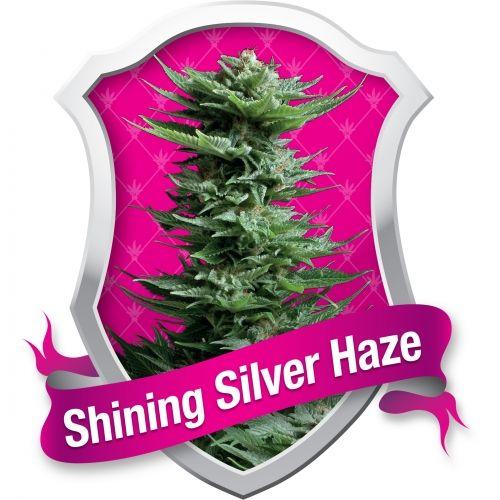 Depuis que deux frères, dans les années 70, ont commencé à produire de la Sativa en provenance du monde entier, les fumeurs de cannabis sont profondément reconnaissants pour l'existence d'un type de plante appelée Haze. À l'origine, elle fut le sommet d'années de production de milliers de graines en provenance de Colombie, du Mexique, de la Thaïlande et du sud de l'Inde. Cette génétique Haze a ensuite rejoi…