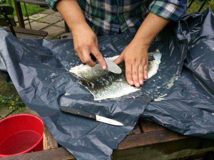 Fiskskunnsgarvning del 1