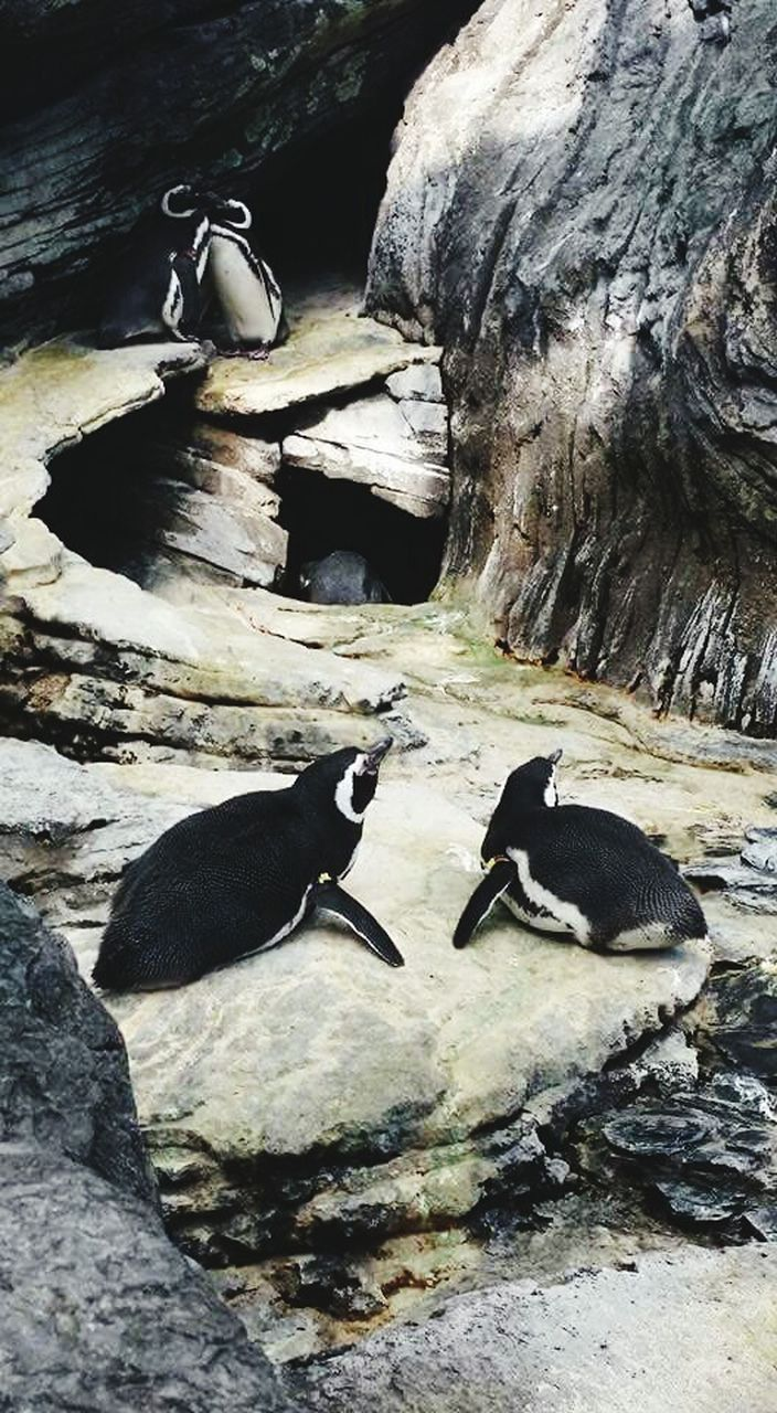 animal themes, animals in the wild, bird, penguin, rock - object, water, no people, nature, animal wildlife, lake, outdoors, day, togetherness, beauty in nature