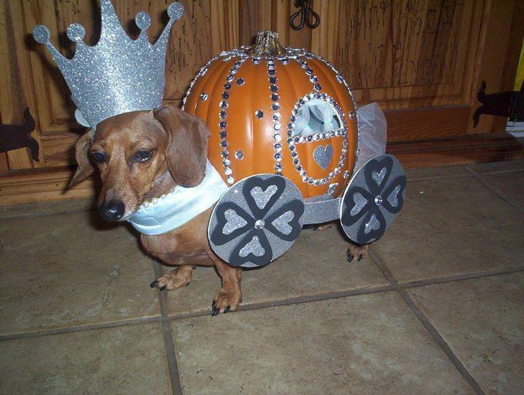 Cinderella Dog Costume