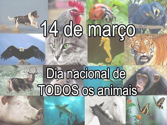 14 de março Dia nacional de TODOS os animais  #dianacionaldosanimais #adote #naoaoespecismo #govegan