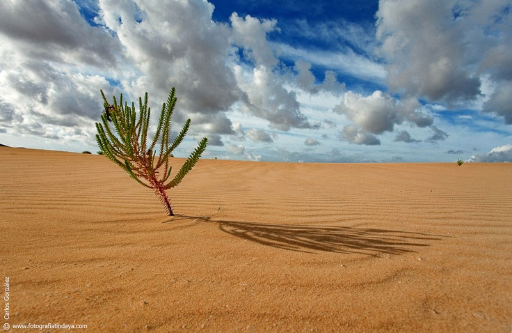Dunas de Corralejo #Fuerteventura @hotelbahiareal