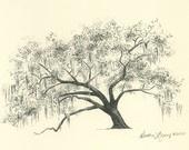 Savannah Live Oak Tree Pen and Ink Drawing Print - Hunter Army Airfield.