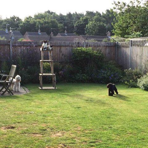 ProtectaPet Ltd's photos: Cat mesh perimeter fence