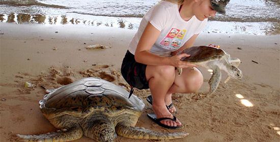 Turtle Island Tour - Tanjung Benoa Beach Water Sports