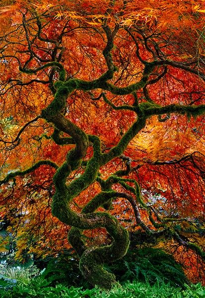 Infinity Tree  -by Peter Lik
