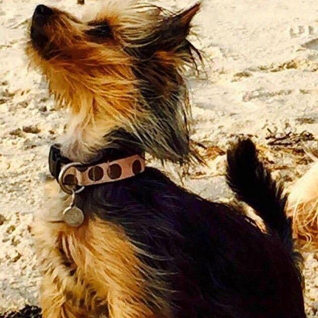 Tak for billedet Leanne :) #dog #dogs #doglife #sol #sun #smuk #sund #stolt #sommer #pote #poter #potebox #paw #paws #dyr #dansk #danish #danish #danmark #denmark