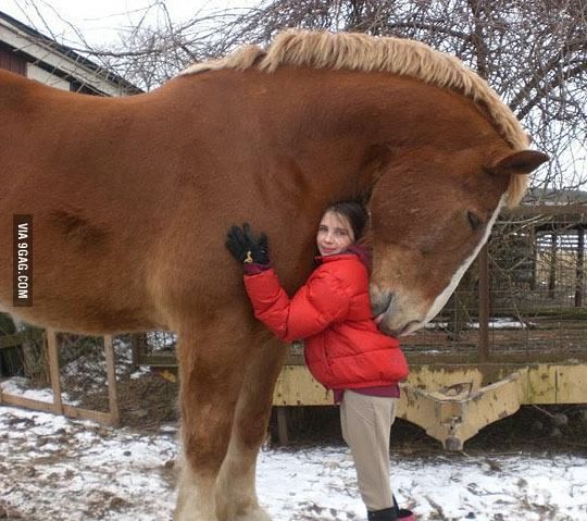 A big hug from a gentle giant.