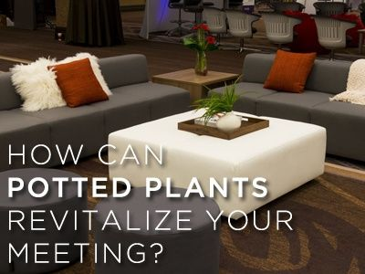 How Can Potted Plants Revitalize Your Meeting?